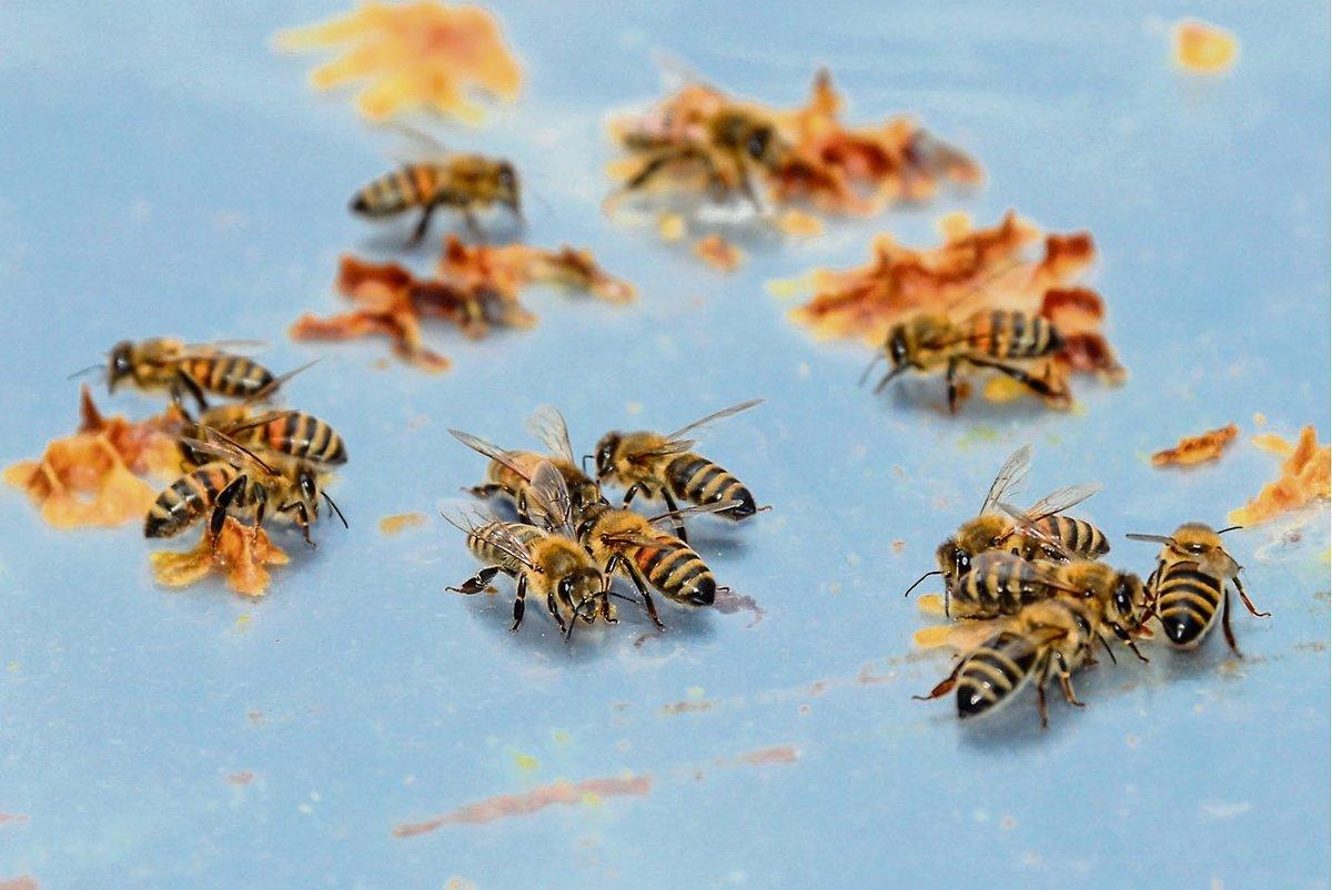 Auch mitten in der Stadt sind die Bienen fleißig bei der Arbeit.