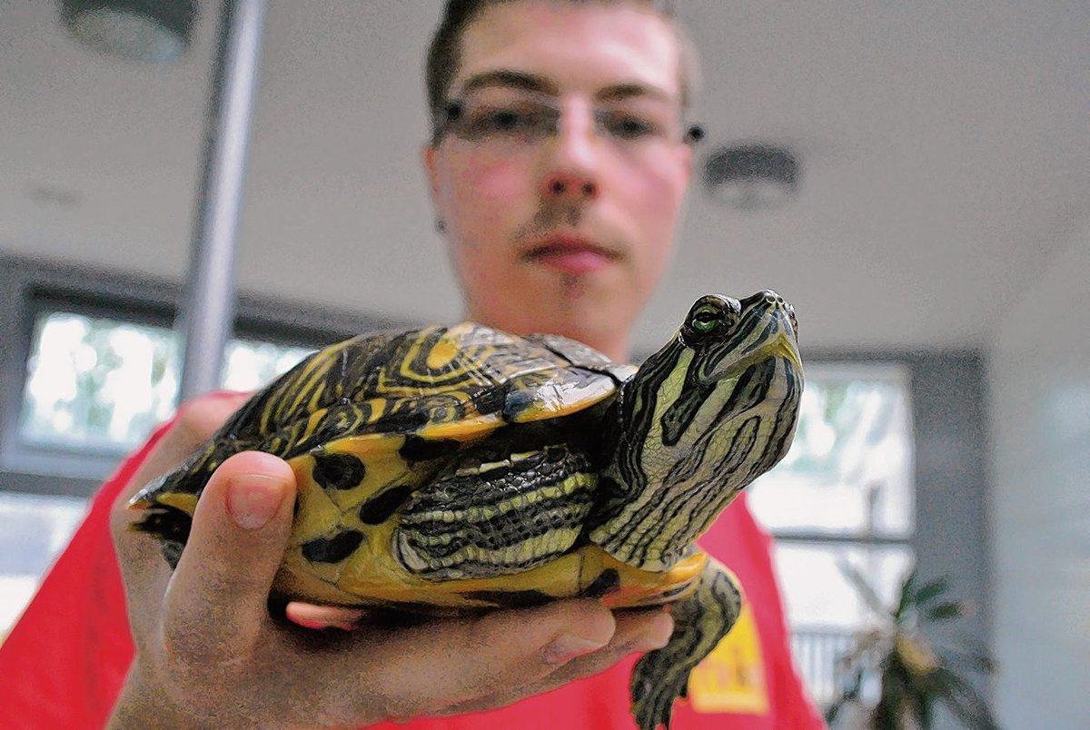 100 Schildkröten Warten Im Tierheim Auf Neue Halter Falkenberg