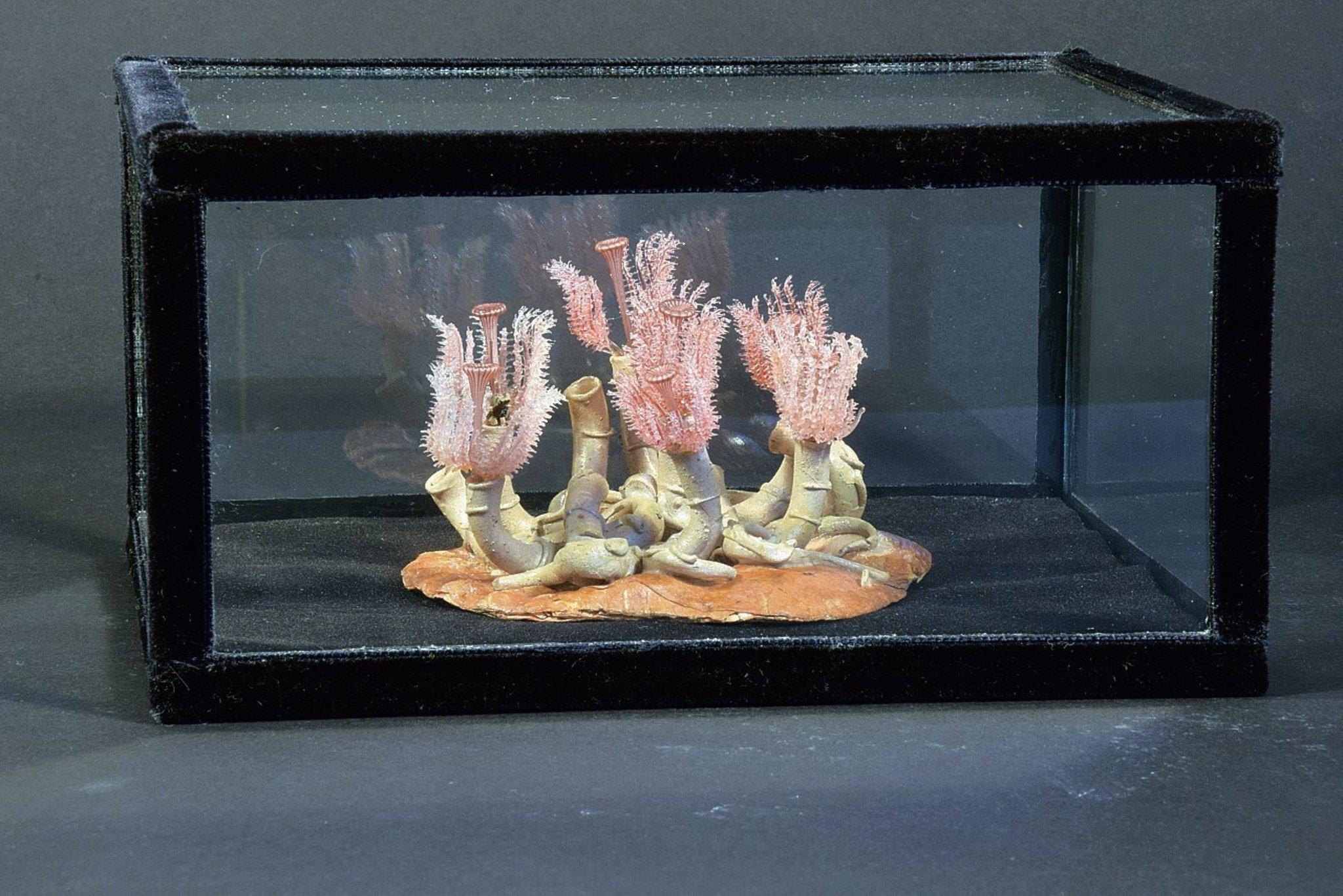 pflanzen aus wachs terrakotta gips und glas dahlem. Black Bedroom Furniture Sets. Home Design Ideas