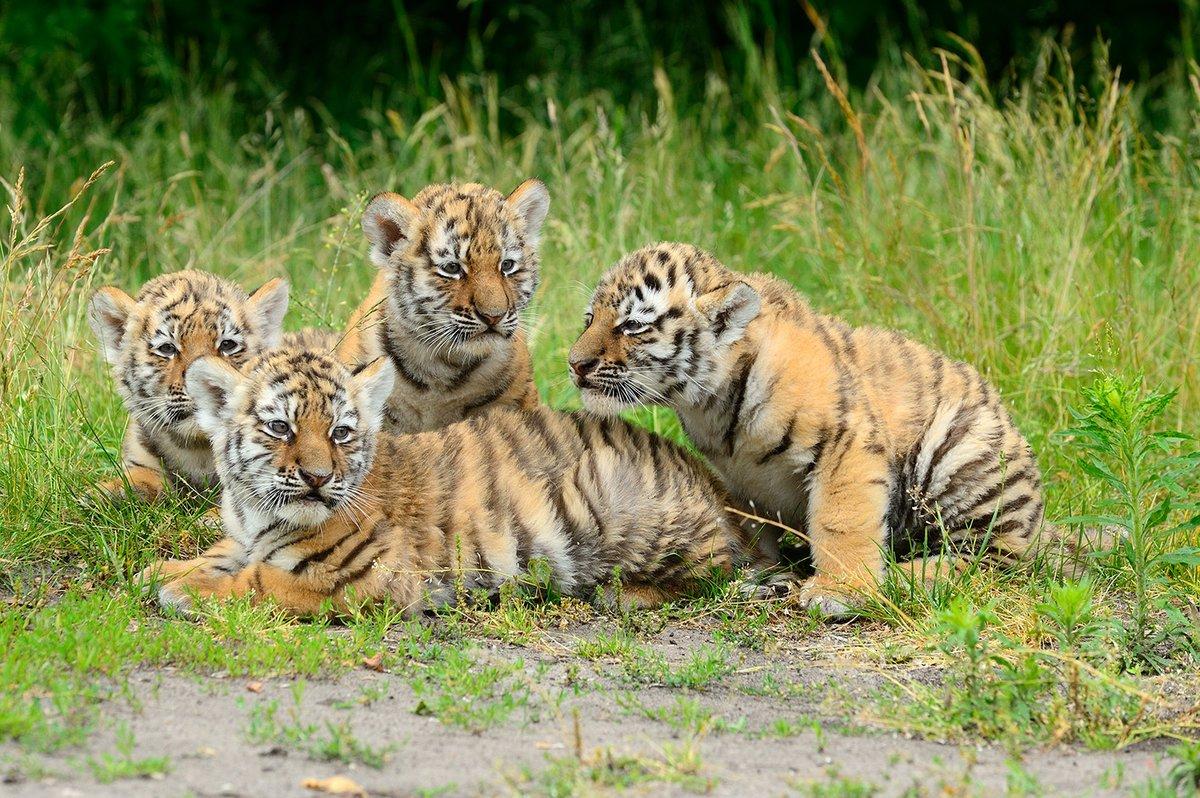 Russische Namen Für Kleine Tiger Vorschläge Erwünscht Friedrichsfelde