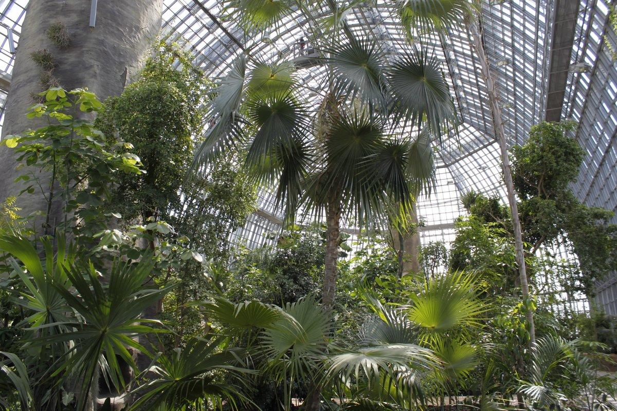 Winterpfad Im Botanischen Garten Lädt Zum Spaziergang Ein Dahlem