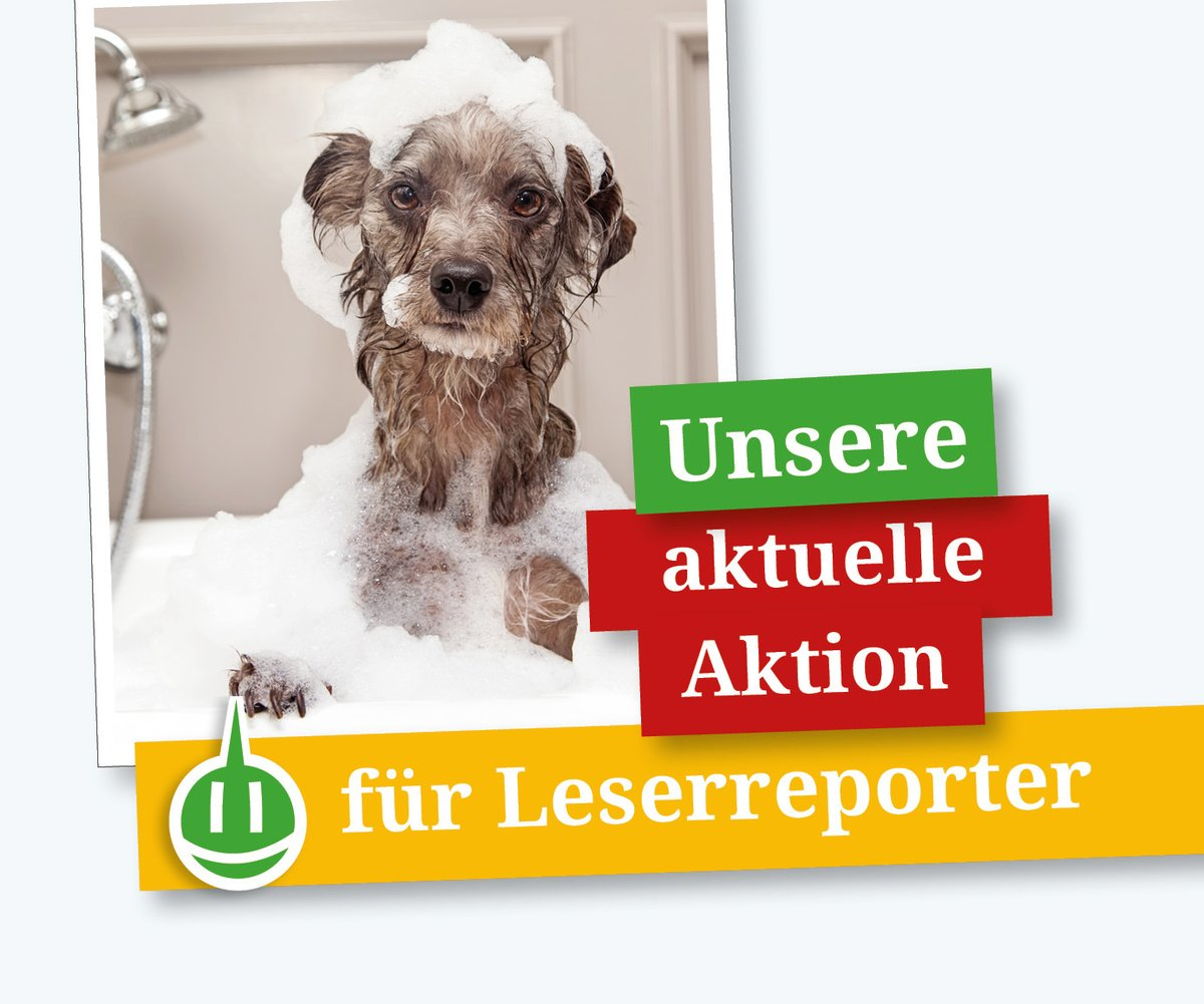 Awesome Coole Haustiere Best Choice Of Mein Tier Ist Das Coolste: Unsere Fotoaktion