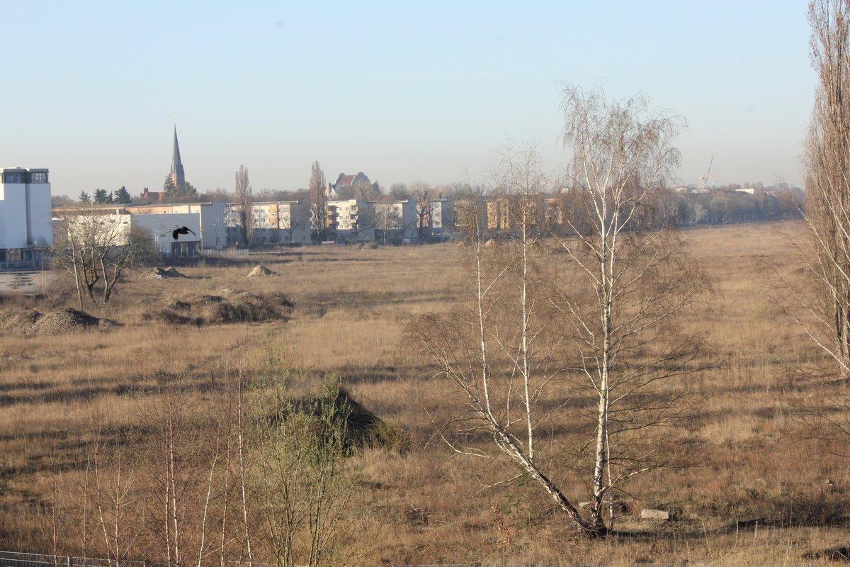 Bäumchen, Büsche und Gras: Viel mehr wird vorerst nicht auf dem früheren Pankower Güterbahnhofsgelände wachsen. Foto: BW