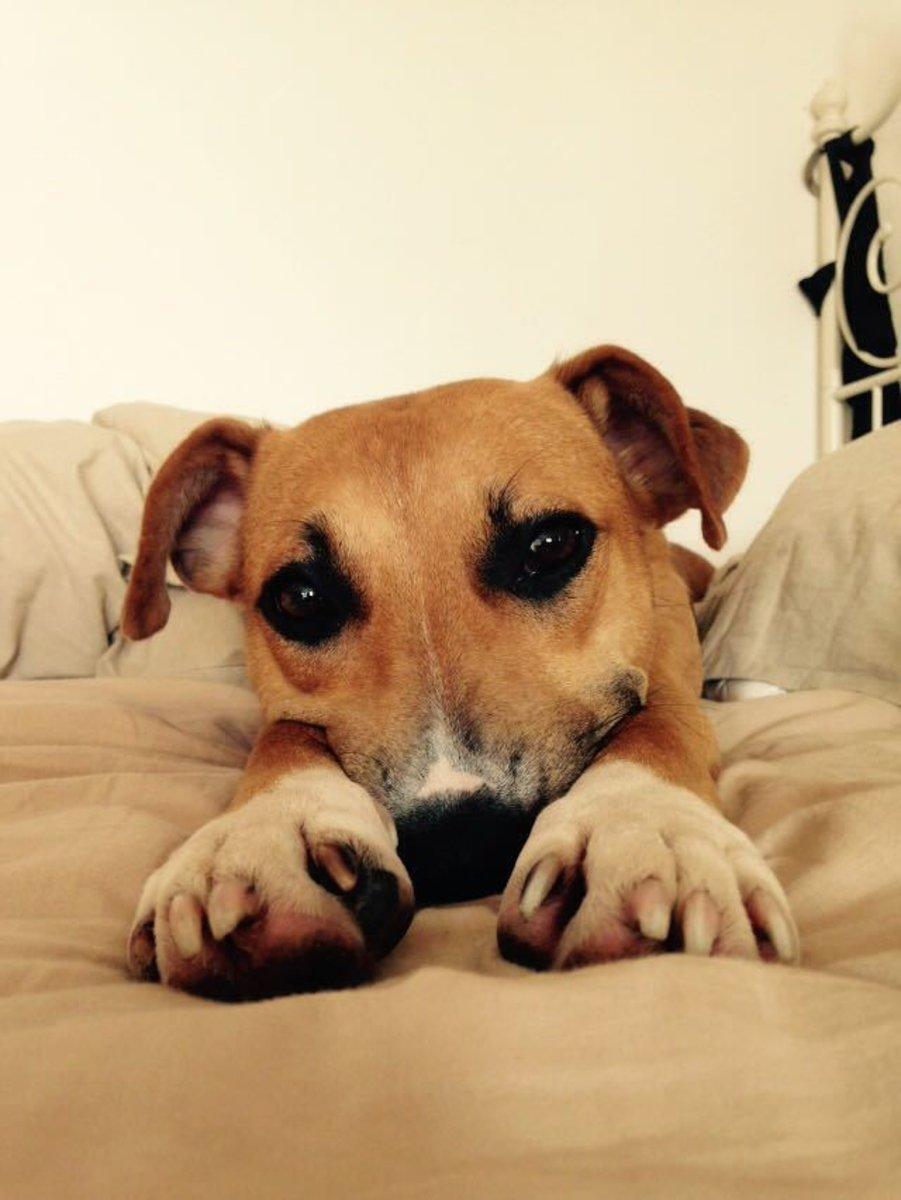 Lucy entspannt nach dem Ausflug im Bett