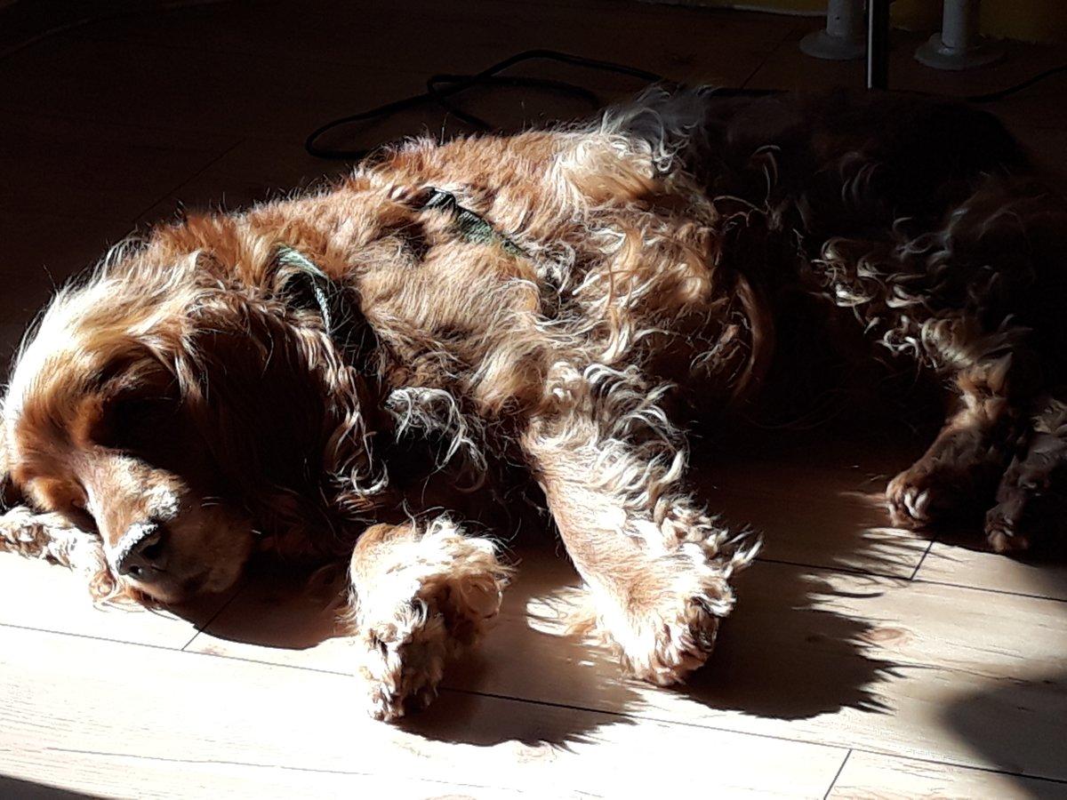 Opa Arry, 15, geniesst die Sonne auf den müden Knochen