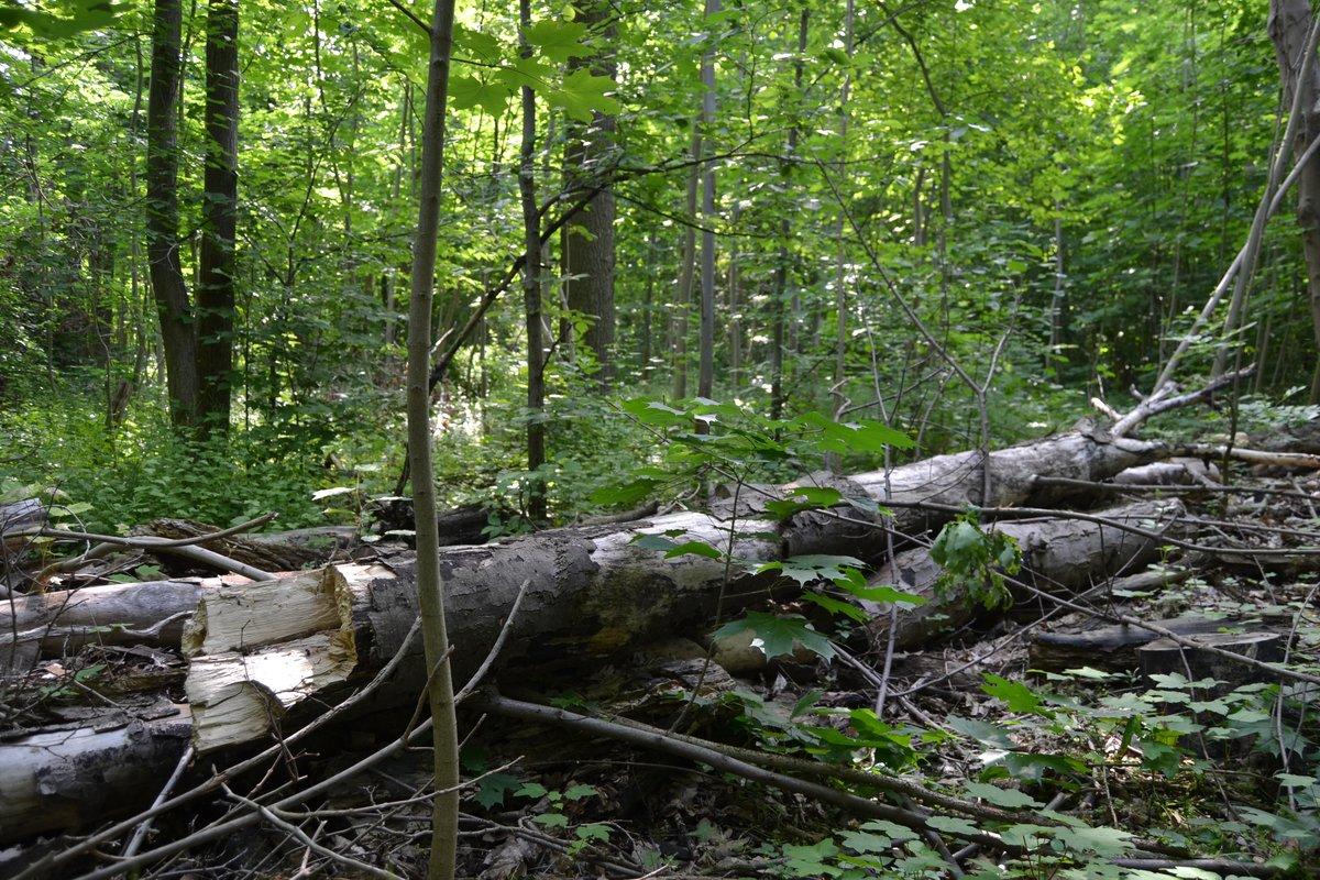 Das Totholz im Waldstück bietet wichtigen  Lebensraum für Insekten und Kleintiere. Hier findet man aber auch Müll und Gartenabfälle.
