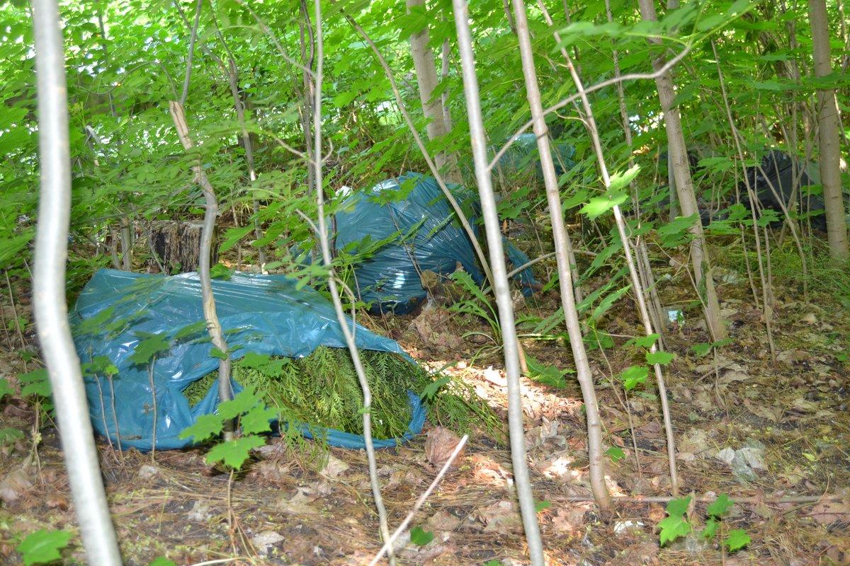 Auch das findet man im Waldstück: Müll und Gartenabfälle.