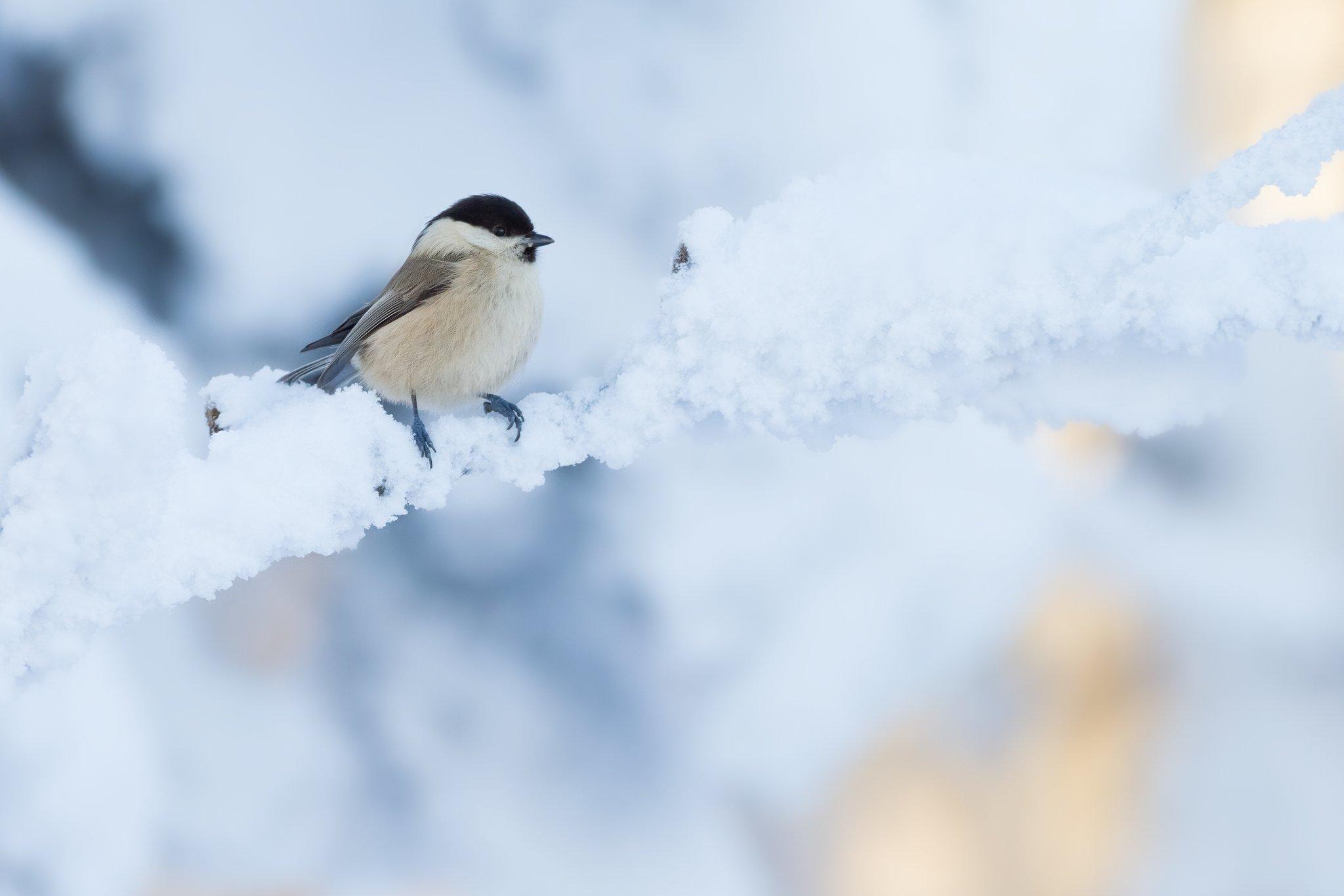 berliner k nnen wieder vogelforscher werden nabu berlin l dt zur stunde der winterv gel ein. Black Bedroom Furniture Sets. Home Design Ideas