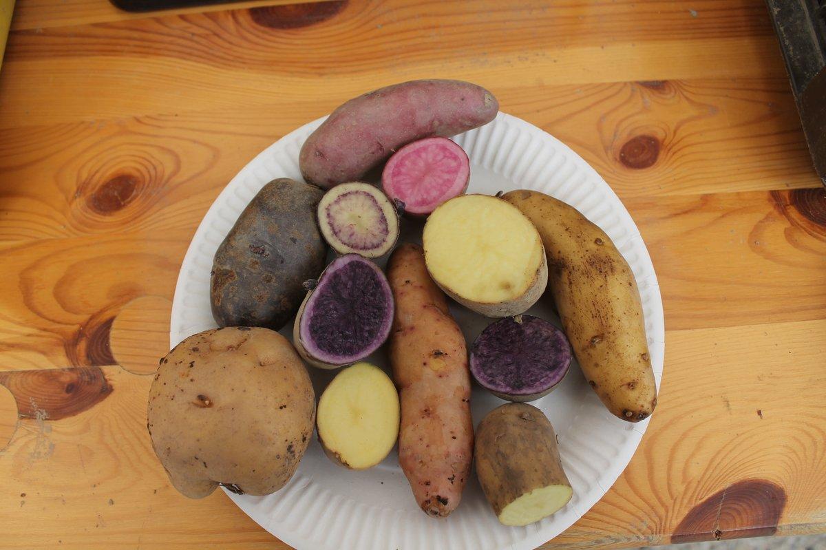 Ganz und zu Extrem Rund um die Knolle: Kartoffeltag auf dem Naturhof - Malchow &TJ_79