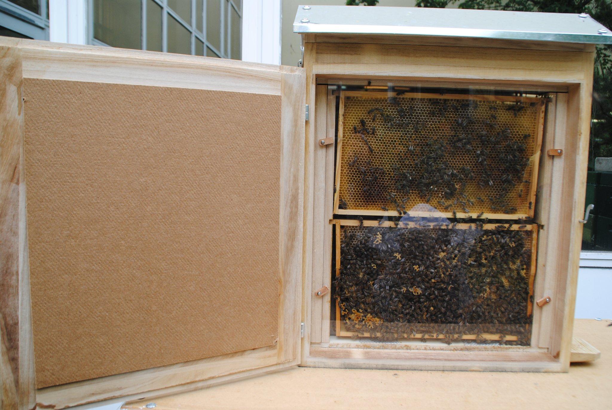 Konkordia Schüler Haben Jetzt Einen Schaukasten Bienen